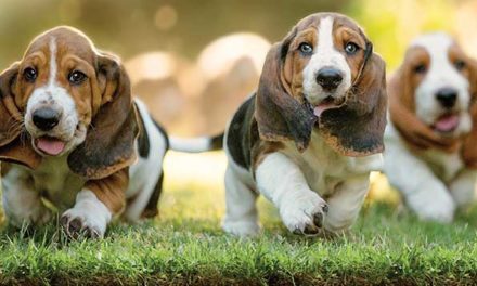 Lawn Chemicals Can Be A Cancer Threat For Your Dog